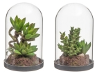 4LIVING TERRARIUM WITH SUCCULENTS ASST.